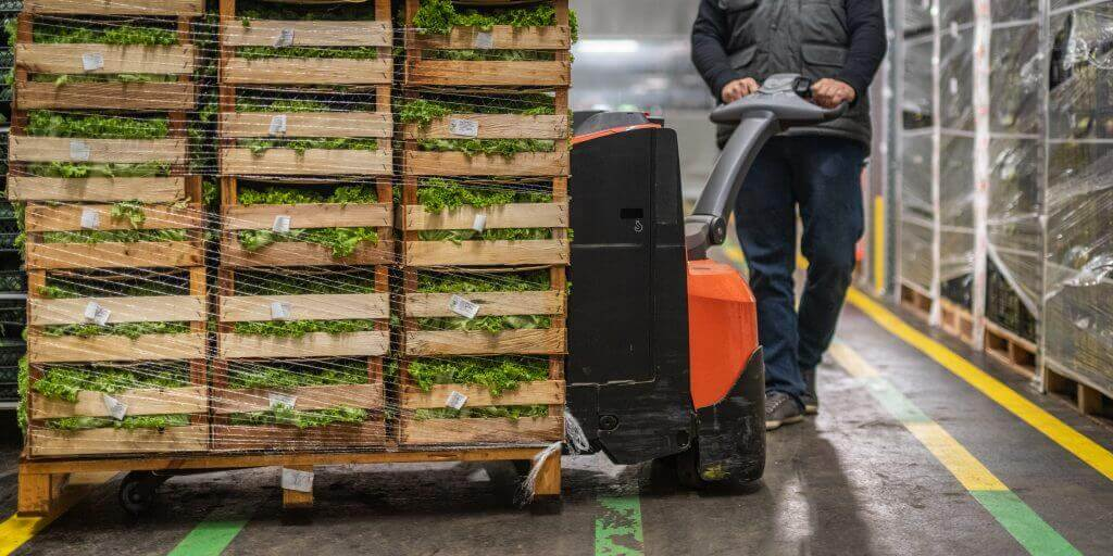 A man moving a pallet of lettuce with an electric hand jack